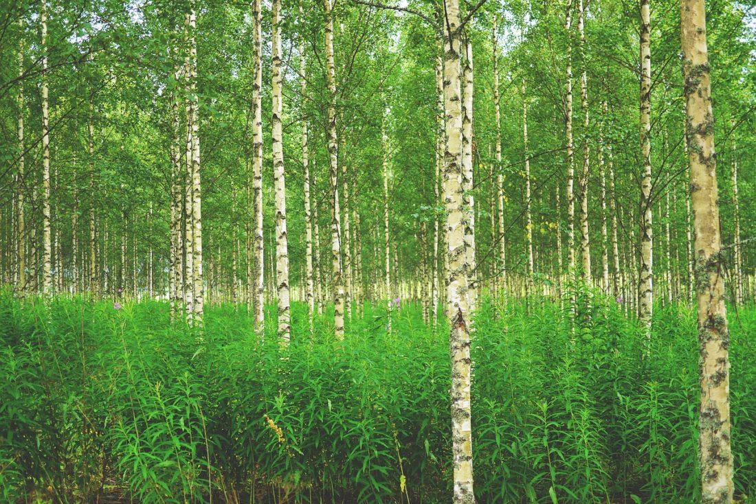 Ekologiset korttitulostimet